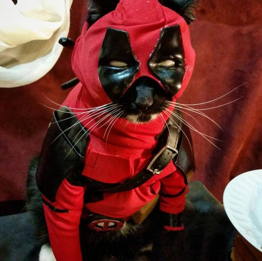 deadpool cat